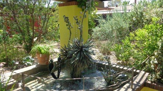 Tucson Botanical Gardens: Yucca fountain