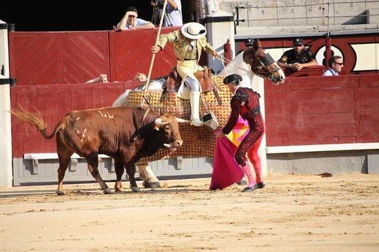 Plaza de Toros las Ventas: Las Ventas Bull Fight