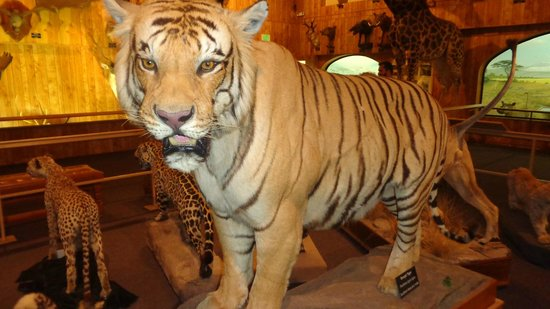 International Wildlife Museum: Beautiful exhibits