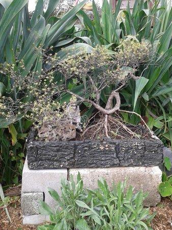 Solscape: Ground Gardens