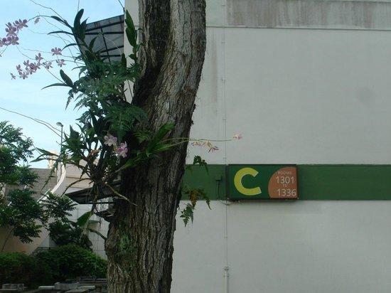 CherryLoft Resorts: везде орхидеи, даже на деревьях