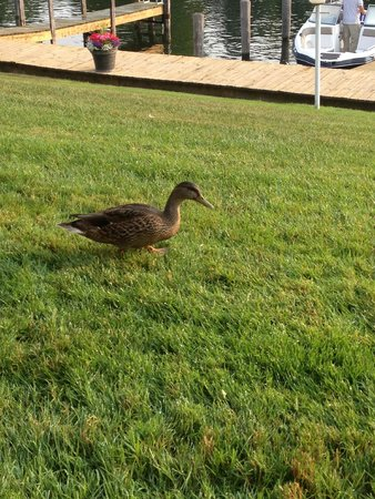Fleetwood Inn and Suites: Morning visitor!