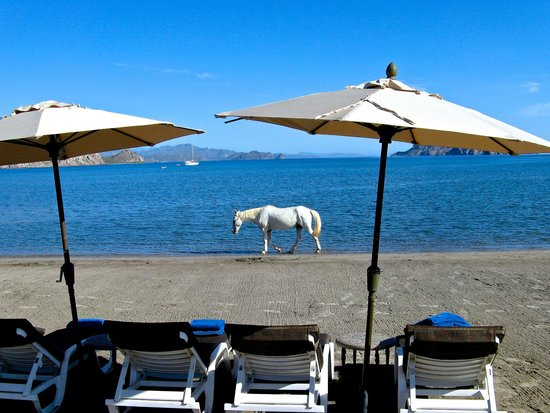 Villa del Palmar Beach Resort & Spa at The Islands of Loreto: If you're the only one on the beach to see the wild horse walk by, did it actually happen?