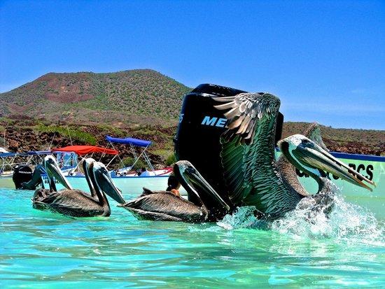 Villa del Palmar Beach Resort & Spa at The Islands of Loreto: The Coronado Island Tour