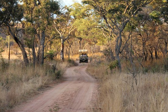 Nedile Lodge: Game drive