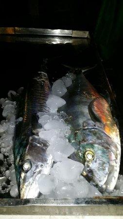 Danima Resort & Restaurant : Pesce appena pescato (abbiamo visto rientrare il pescatore Moreno)