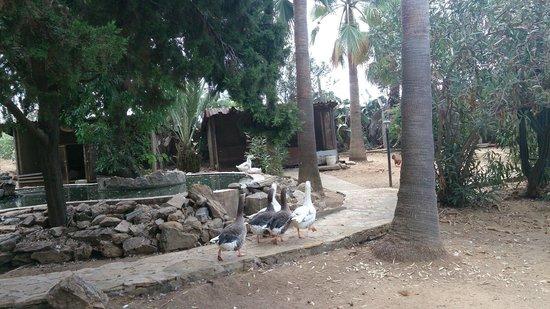 Hotel Club Tropical Beach: Małe zoo