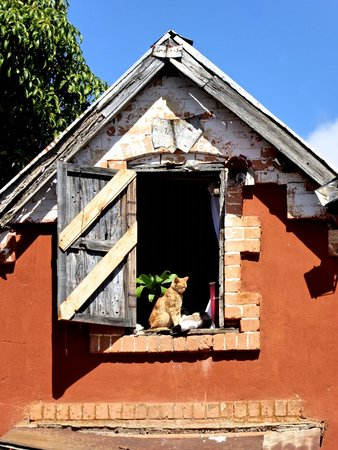 Ambohimanga : Cats in the village