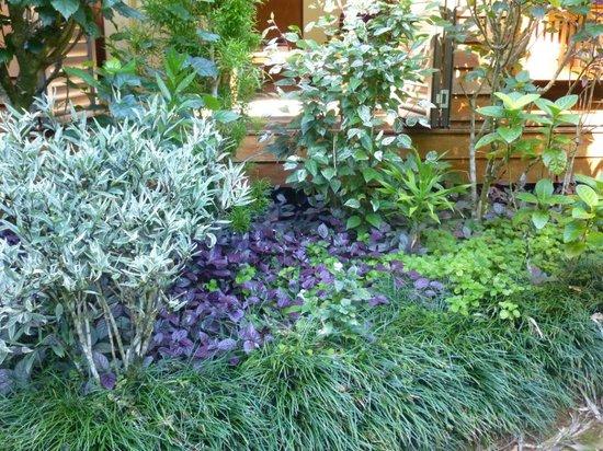 Cow Bay Homestay: Garden colours