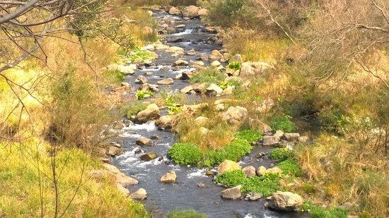 Hornbill Lodge: A River runs through it...