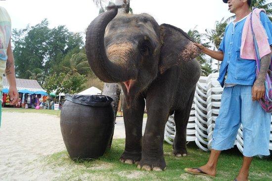 Angsana Laguna Phuket : Lucky