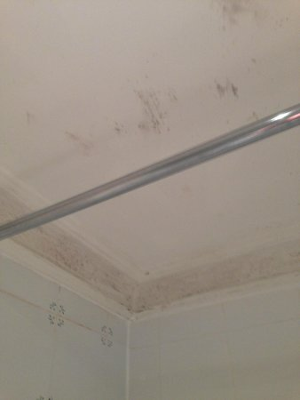 The Majestic Hotel: mould on ceiling