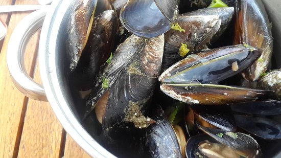 Den Anker: muscles with barnacles
