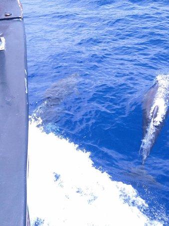 Bussard & Inia Ocean Explorer Tazacorte : Flipper und Co. haben uns ein wenig begleitet.