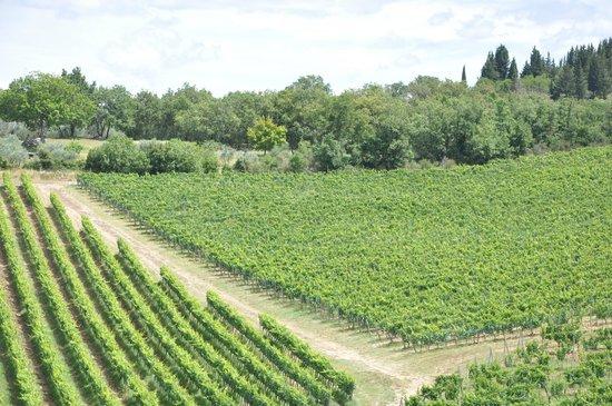 Tuscan Wine Tours by Grape Tours : Chianti fields