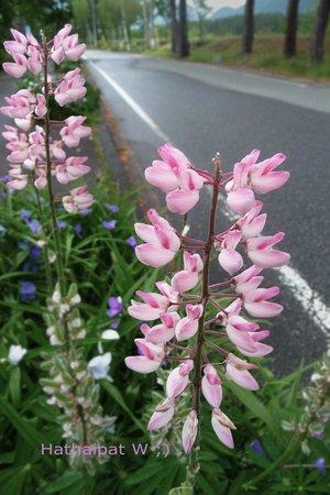 Kurobe Kanko Hotel: ดอกไม้ริมถนน