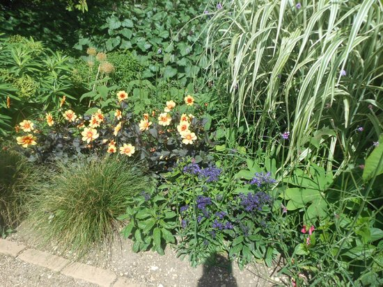 University of Oxford Botanic Garden: Ancora fiori