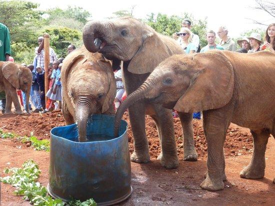 David Sheldrick Wildlife Trust : Who can I splash next?