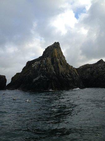 Cornish Sea Tours: 3