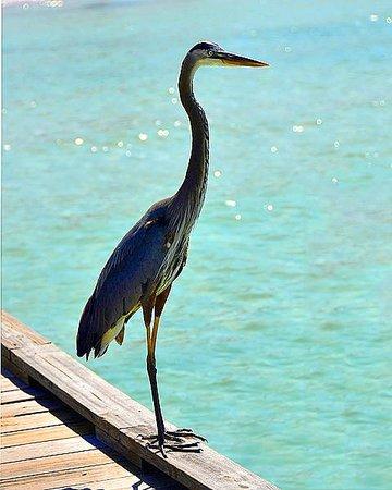 Isla Anna Maria, FL: bird of paradise