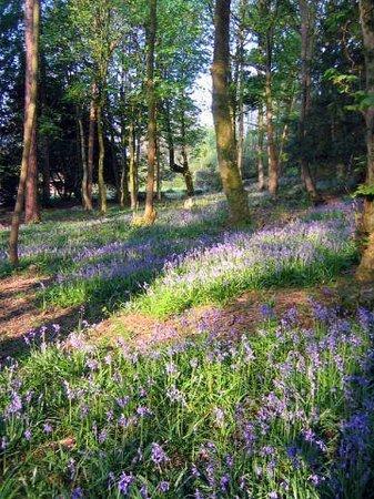 Finglen House Bed & Breakfast: Private Woodland