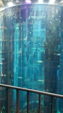 Radisson Blu Hotel, Berlin: Close up of fish tank