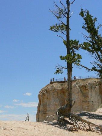 Bryce Point