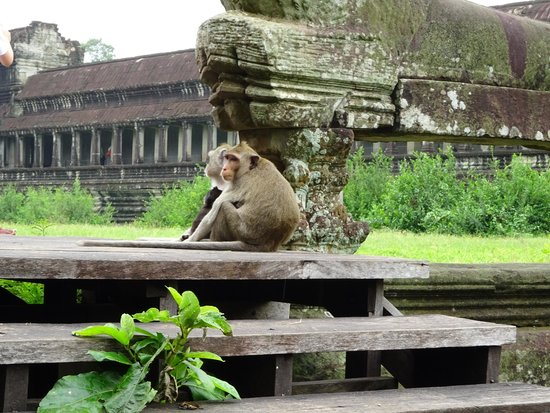 Private Siem Reap Tour Guide: Local Monkey