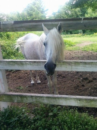 Inn On The Horse Farm: George the horse