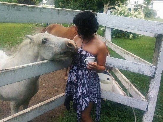 ذا إن أو ذا هورس فارم: Sweet horse