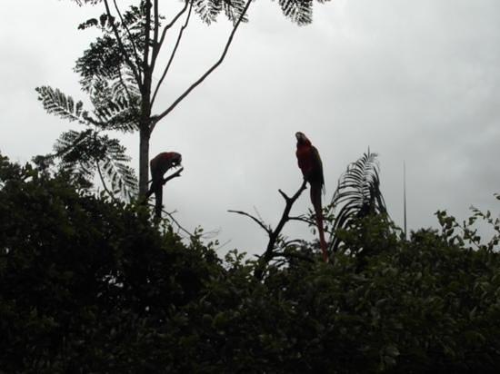 Anaula Nature Resort : Papegaai