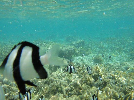 Mariana Resort & Spa: 魚1