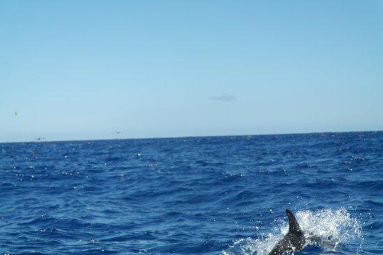 Madeira Panoramico Hotel : boottocht tussen de dolfijnen en walvissen