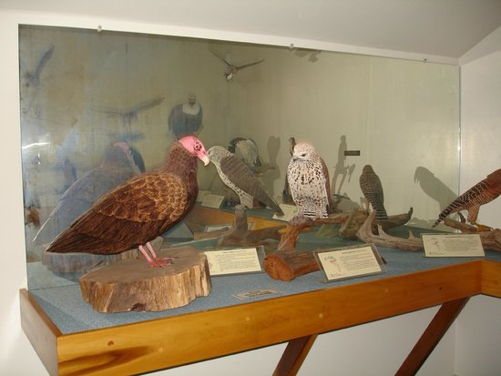 Birds of Vermont Museum : more birds
