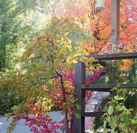 Quincy, Kalifornien: Fall color at Ada's Place Motel Cottages