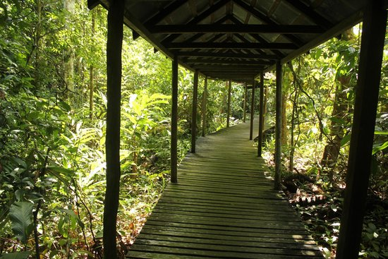 Sukau Rainforest Lodge: Rainforest walk