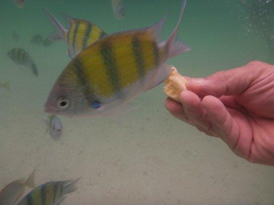 Phuket Sail Tours: Hand Feeding the fish