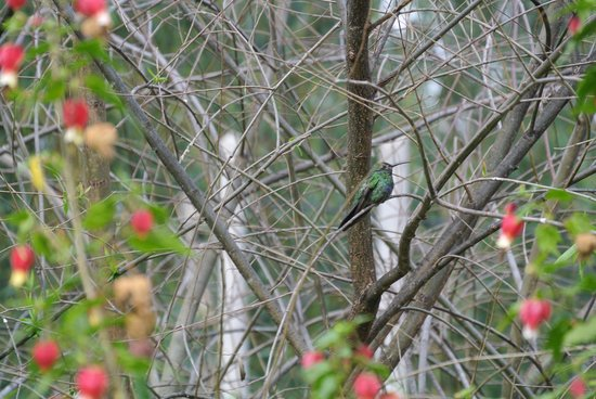 The Green House Peru: Humming bird/kolibri: waaw!!