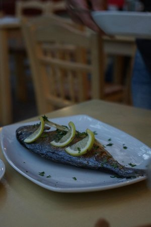 Lithos: fish