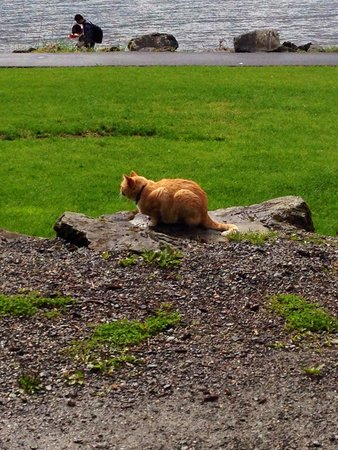 Shrine of St. Therese : Resident cat