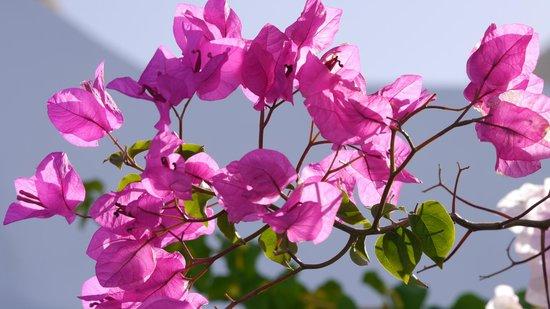 Remezzo Villas: Blütenpracht am Pool