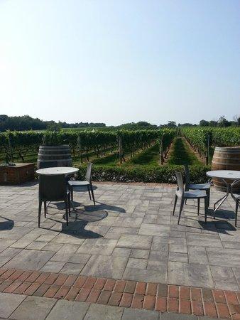 Pellegrini Vineyards: outside
