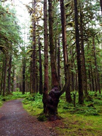Herbert Glacier : Forest