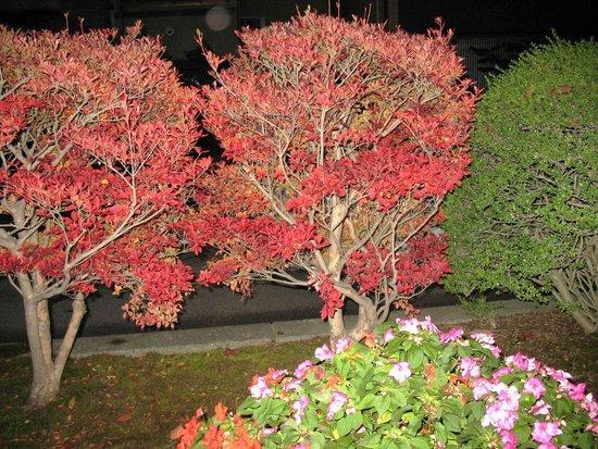 Le jardin fotograf a de jard n kenrokuen kanazawa for Jardin kenrokuen