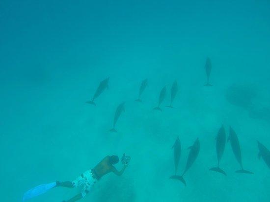 Magic Tulip Beach Resort: delfini in escursione a Satayah