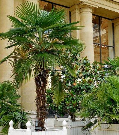 Petit Palais, Musée des Beaux-Arts de la Ville de Paris : Subtropical plants in the museum's garden
