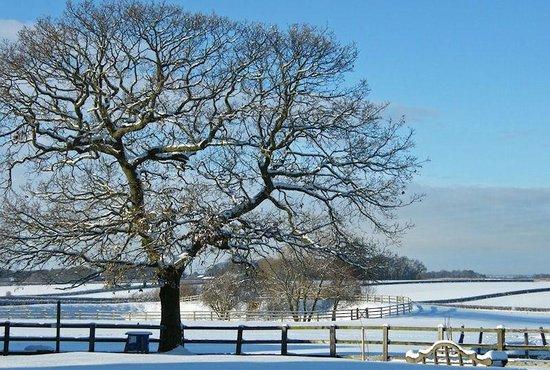 Broadgate Farm Cottages: Snow