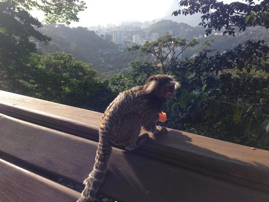 Altos de Santa Teresa: Feeding monkeys