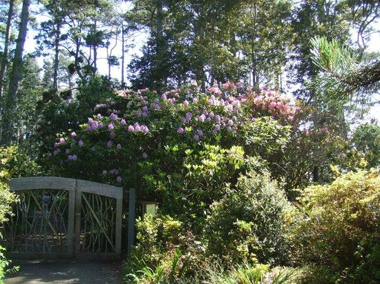 Mendocino Coast Botanical Gardens: Rhodies by the gate