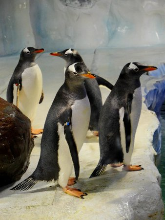 National Sea Life Centre: PENGUINS
